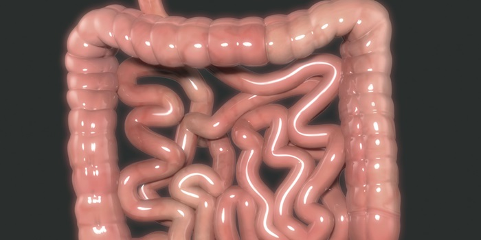 Microbes in the human gut can harbour resistance genes