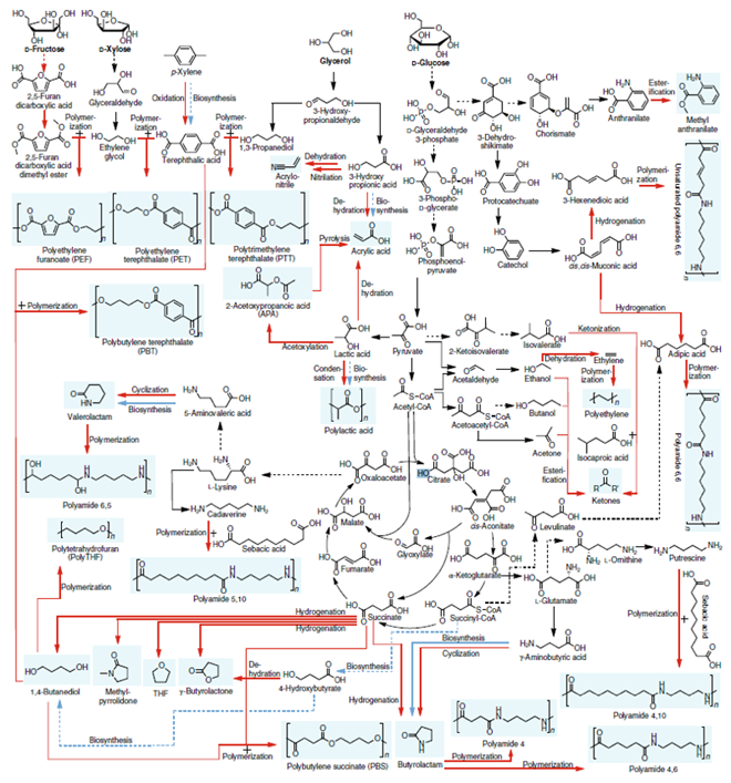 Metabolic Map